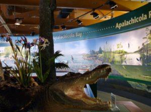 Alligator-diaorama-0dQIic.tmp_